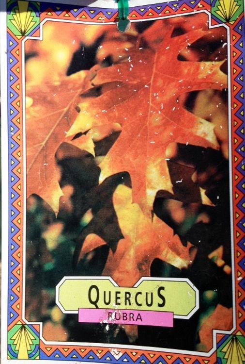 Querub-5