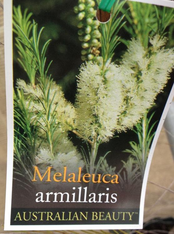 Melarm-4