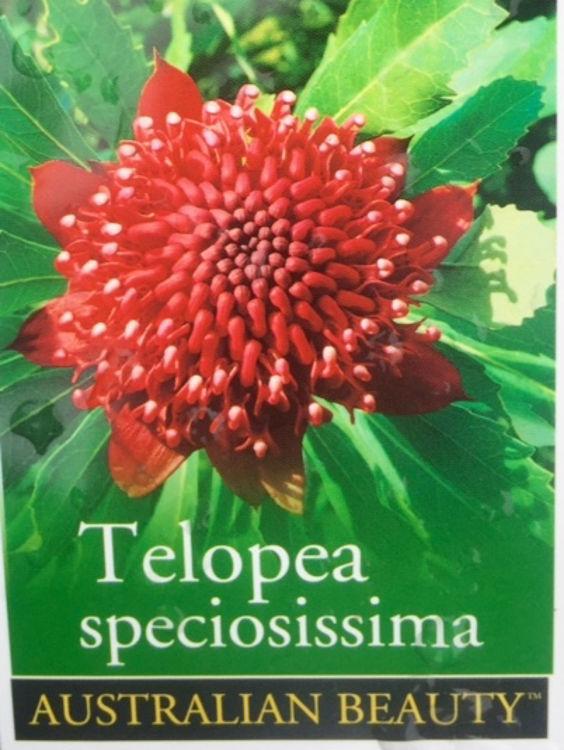 Telspe-6