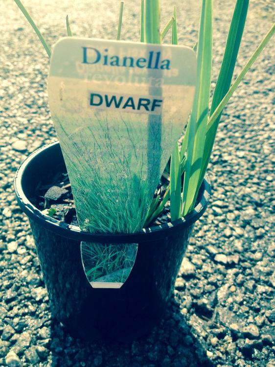 DiarevDw-4