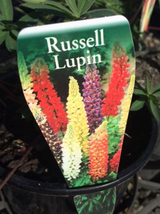 Luppol-5