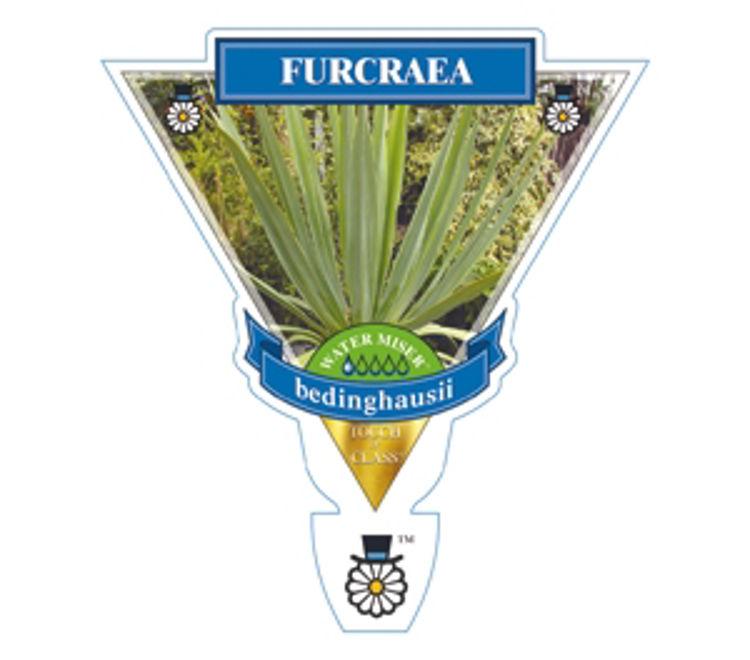 Furbed-4