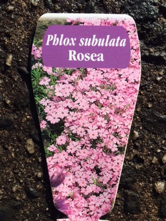 PhlsubRo-4